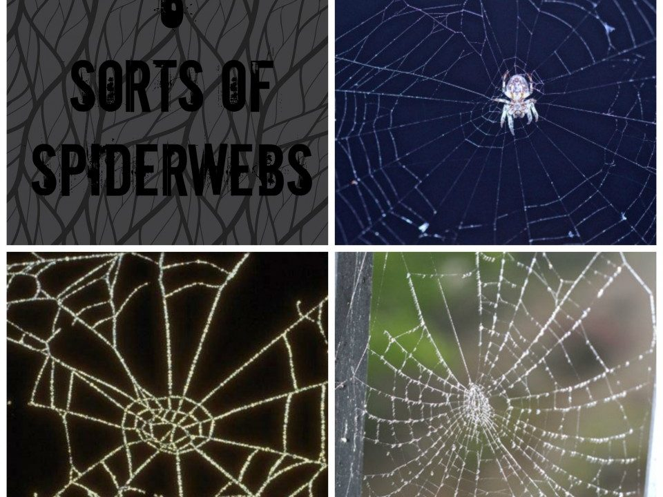 spiderwebs - Toddlebabes