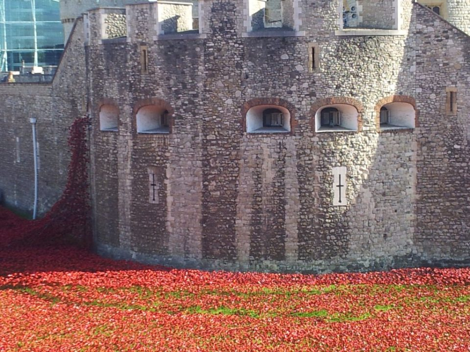 poppies, London, Remembrance day