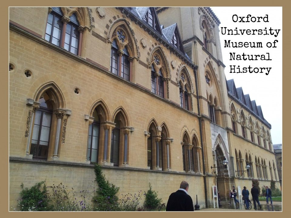 Oxford Museum of Natural History - Toddlebabes
