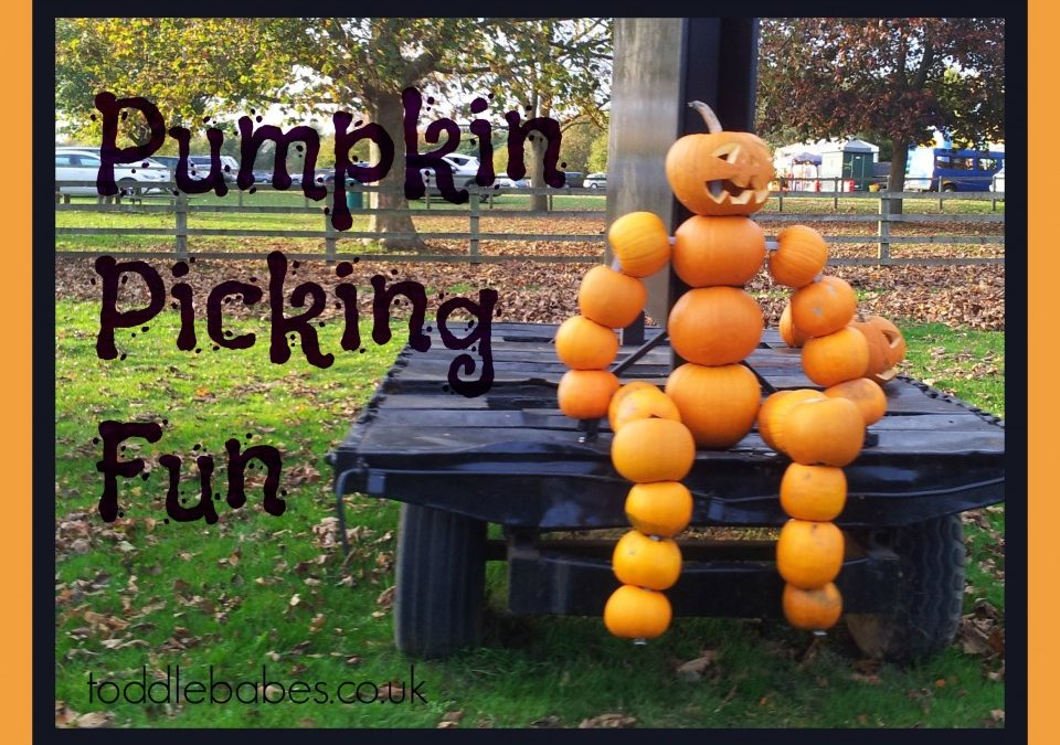 Pumpkin picking - Toddlebabes - Learn to Play - Play to Learn
