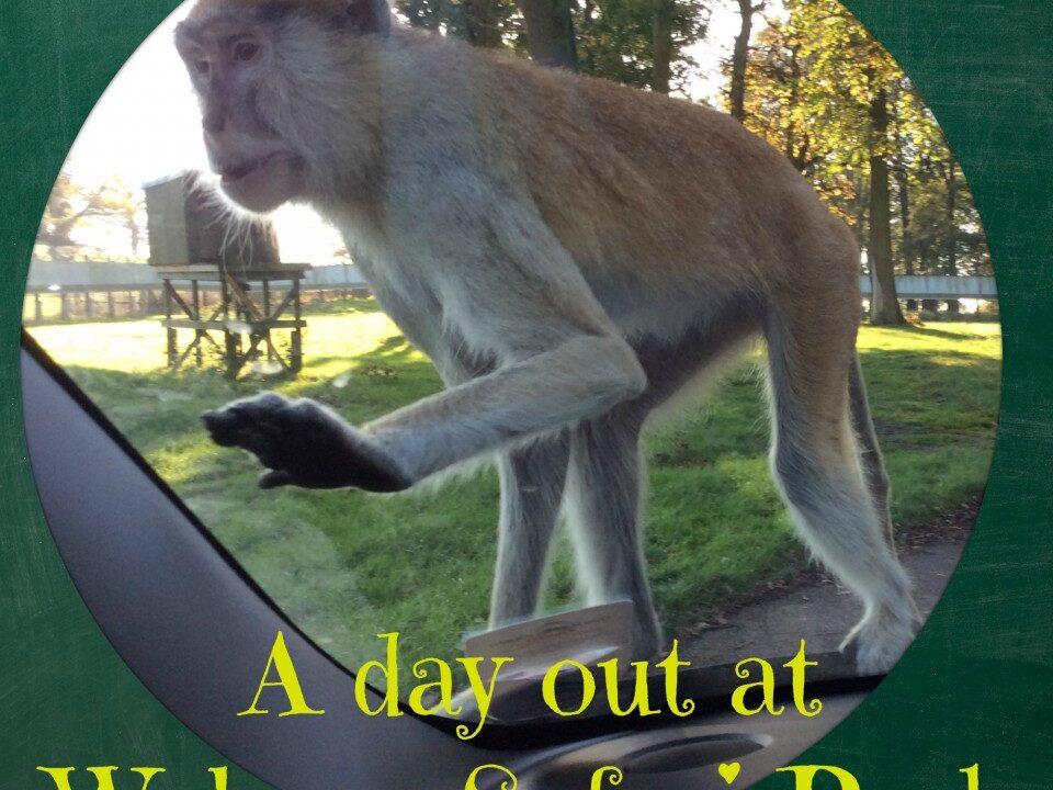 woburn, safari, animals, monkey