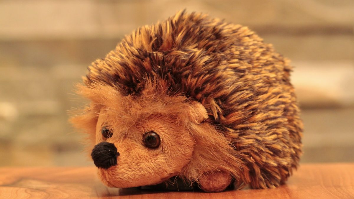 hedgehog, animal, soft toy